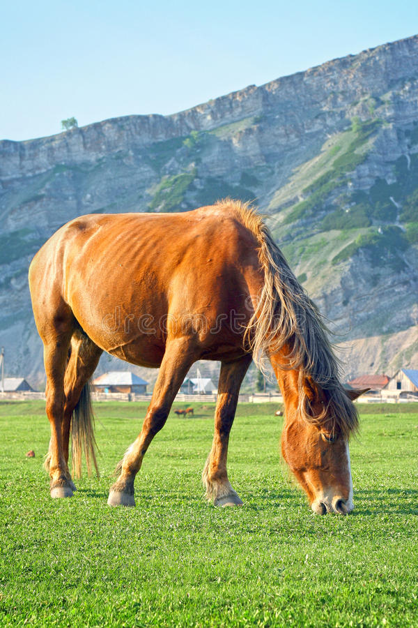 A horse on a valley royalty free stock images