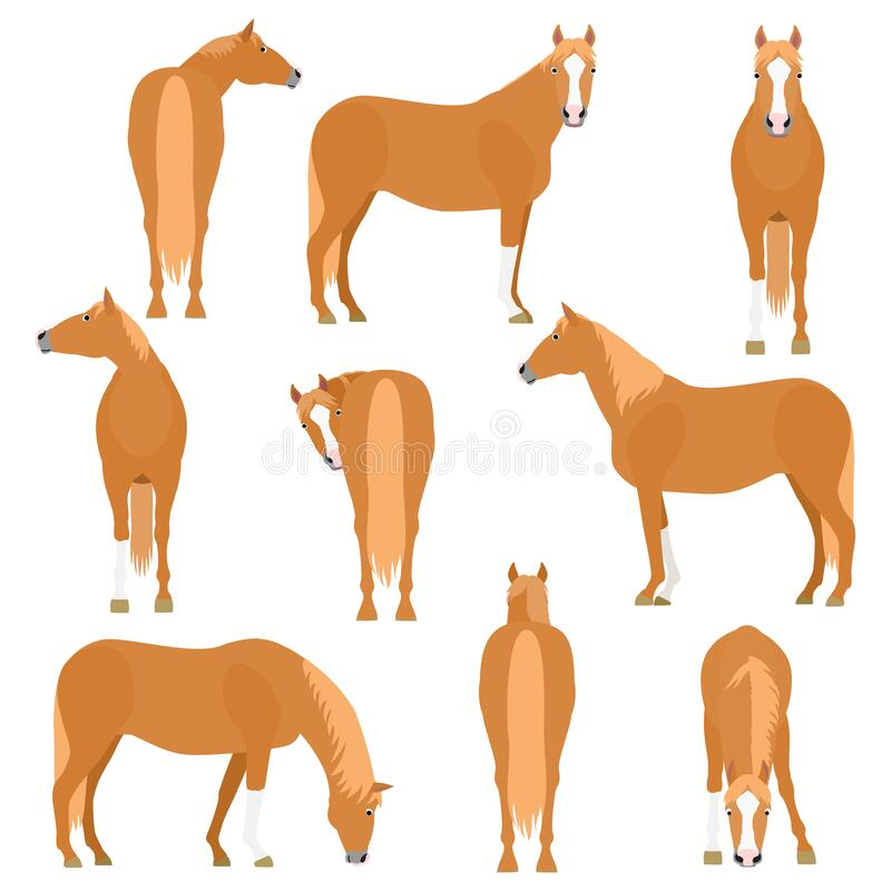Horse various pose set. Chestnut horse various pose set, collection of horse posing on white vector illustration