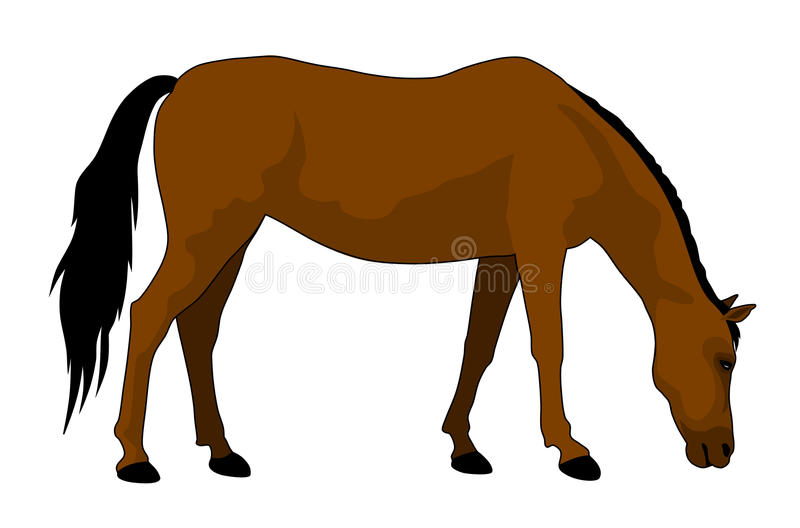 Horse stock illustration
