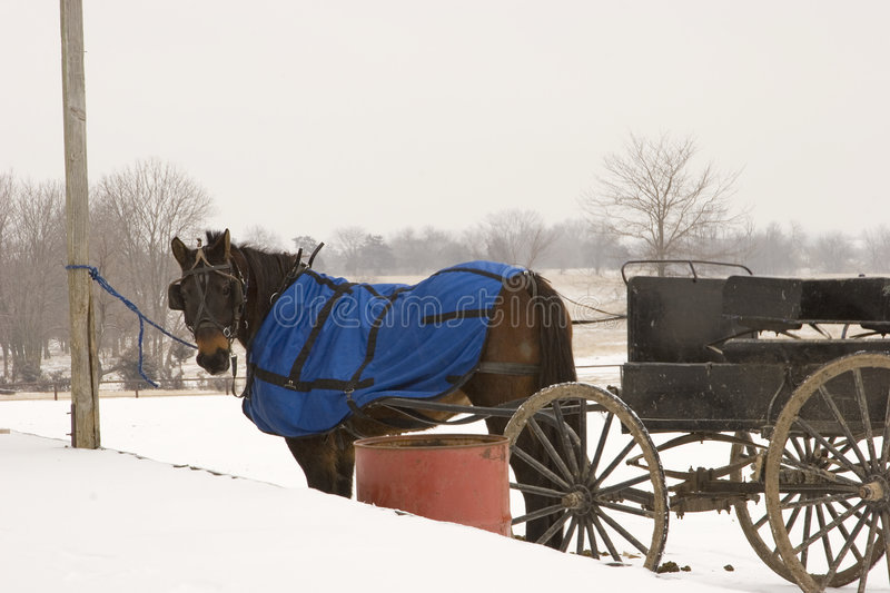 Horse and wagon royalty free stock photo