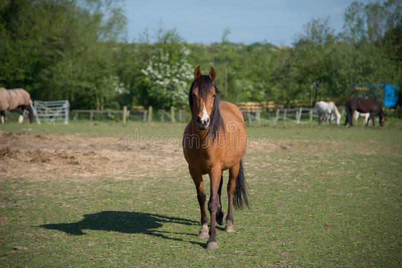 Horse walking forward stock photo