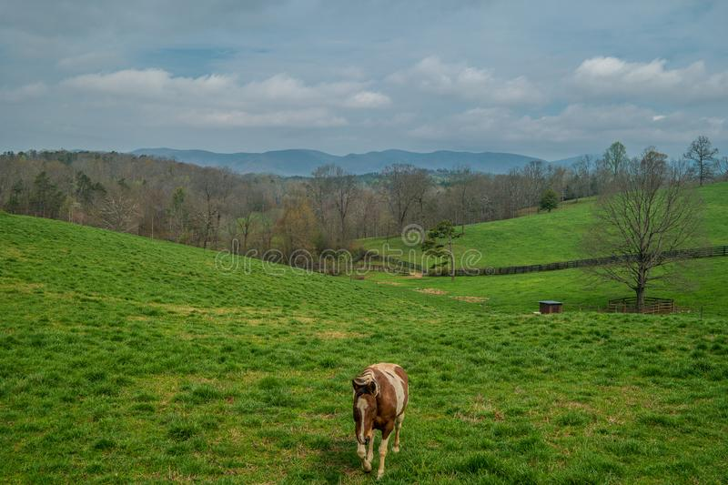 Horse walking in the pasture royalty free stock photos
