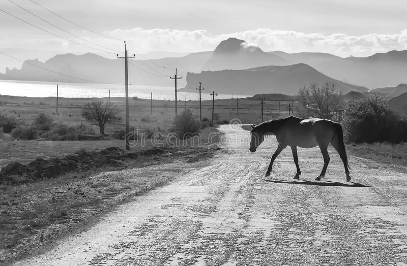Horse walking on the road stock photography