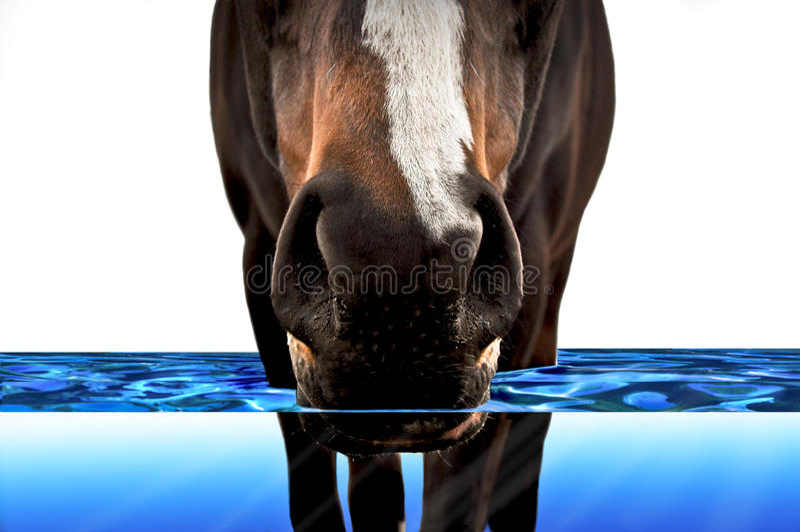Horse walking through water stock images