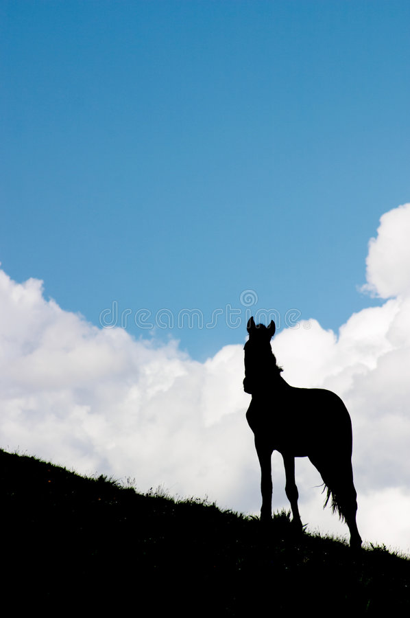 Free Horse Watching Royalty Free Stock Images - 500179
