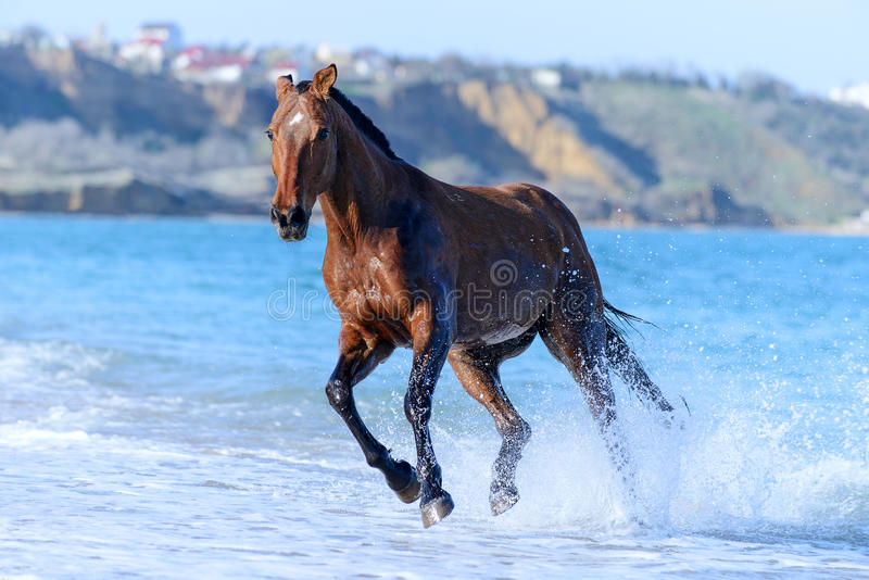 Download Horse In The Water Stock Images - Image: 30812474