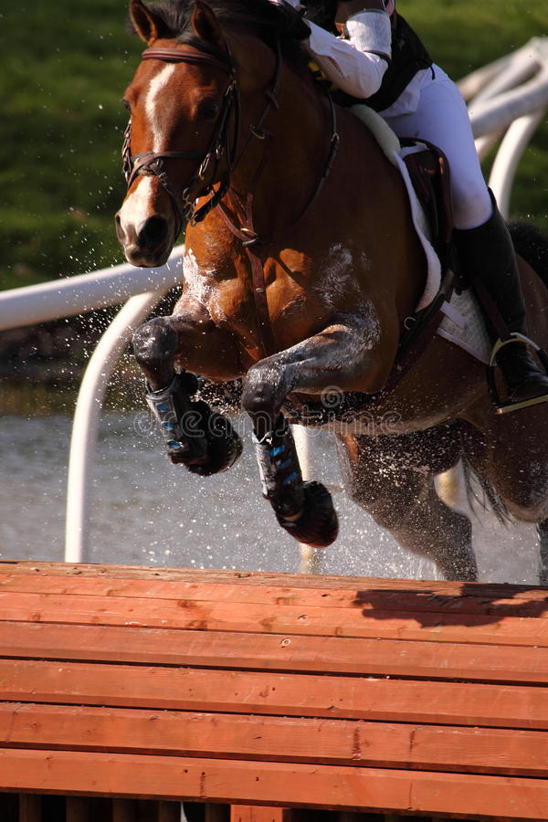 Horse at water jump stock photo