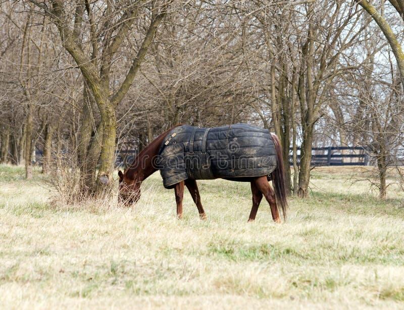 Download Horse Wearing Blanket Royalty Free Stock Photo - Image: 7679445