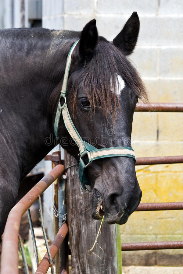 Download Horse On West Virginia Farm Stock Photo - Image: 11153874