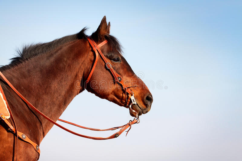 Download Horse in western equipment stock image. Image of ranch - 13834969