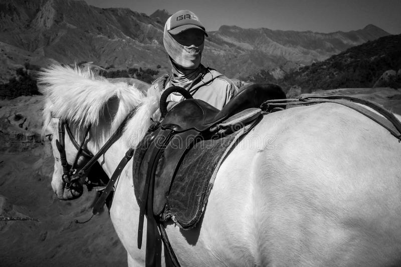 Horse, White, Black, Black And White royalty free stock images