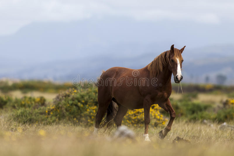 Horse In The Wild Royalty Free Stock Photography