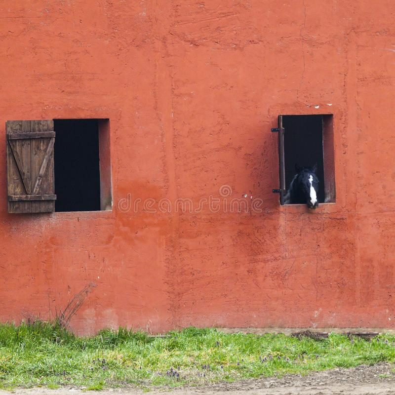 Horse at the window stock image