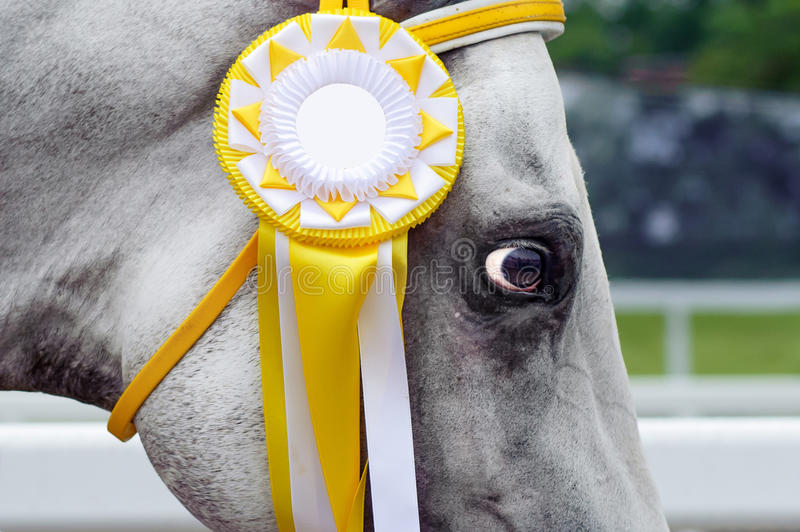 Horse-winner in sports trials. Close up of the head with the decoration of the winner. Close up of the head, eyes royalty free stock images