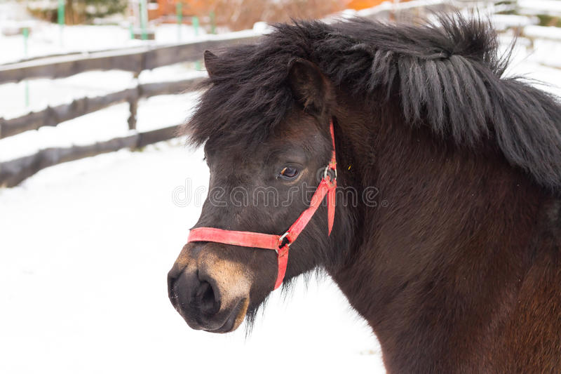 Horse on the winter field