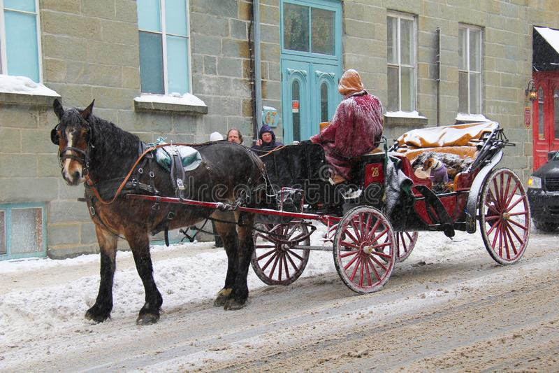 Horse in winter in Quebec City serve as transportation to mostly tourist. Horse in winter season in Quebec City Canada catering mostly to tourist royalty free stock image