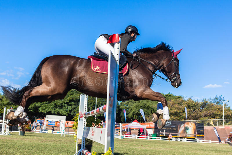 Horse Woman Rider Flight Jump Editorial Stock Image - Image: 32904824