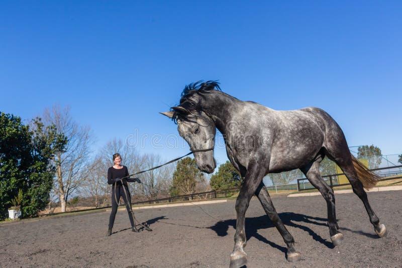 Horse Woman Training Gray Animal Outdoor Arena royalty free stock photo
