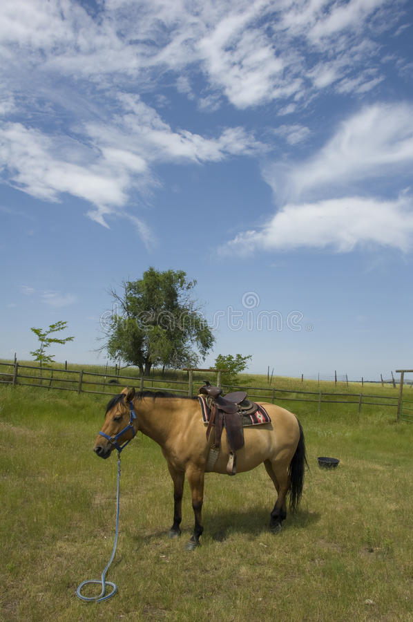Download Horse on Wyoming Landscape stock image. Image of fence - 10392881