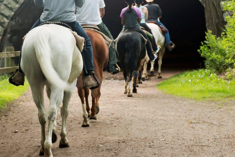 Horseback het berijden in een tunnel stock foto's