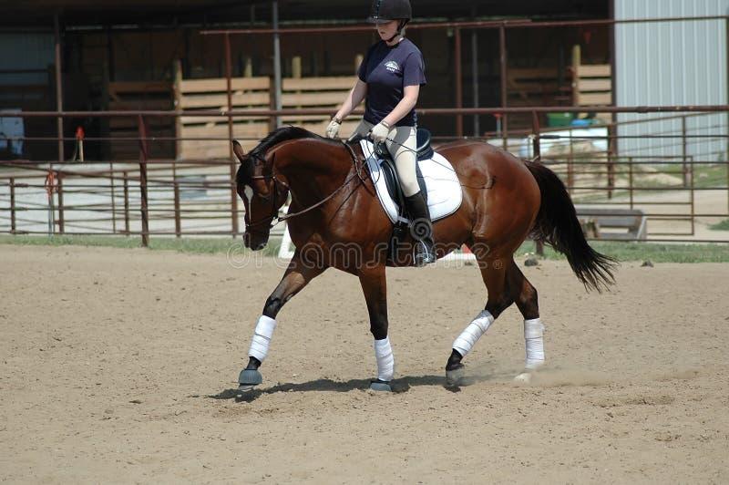 Horseback het berijden Les stock afbeelding