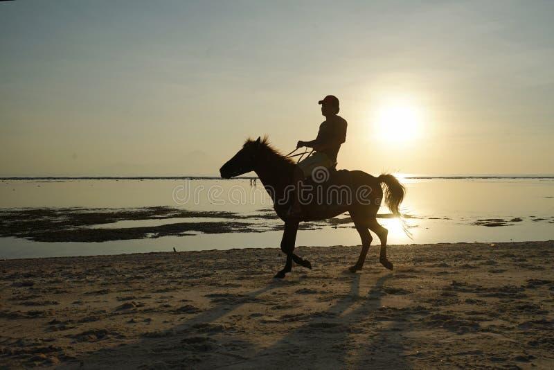 Horseback jazdy sylwetka przy zmierzchu czasem fotografia royalty free
