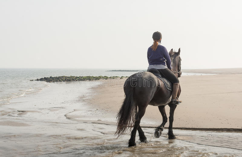 Horseback riding on the beach early in the morning royalty free stock photo