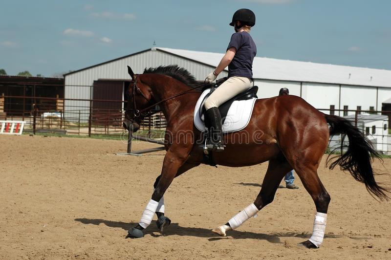 Download Horseback riding Lesson stock image. Image of polos, lesson - 26798475