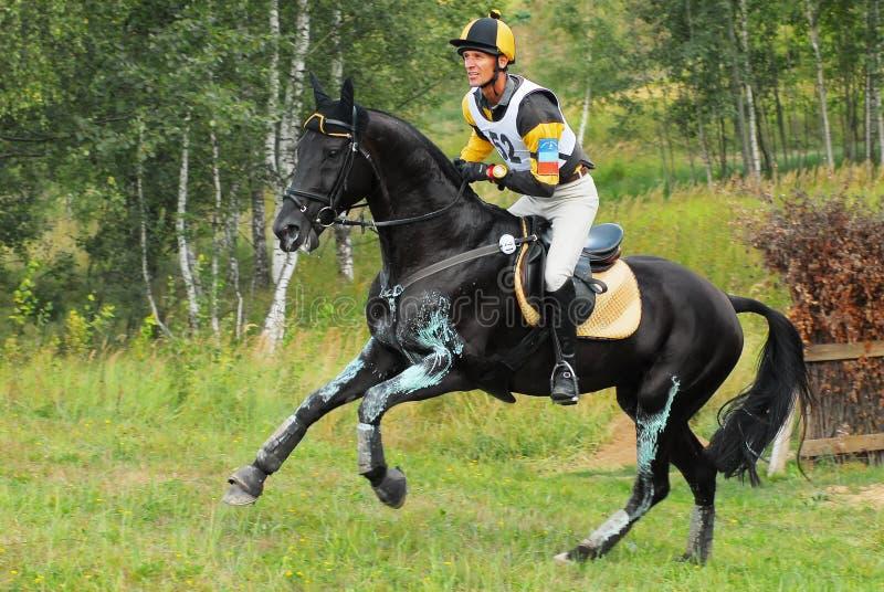 Horsebak do homem em galopar o cavalo preto da castanha imagens de stock