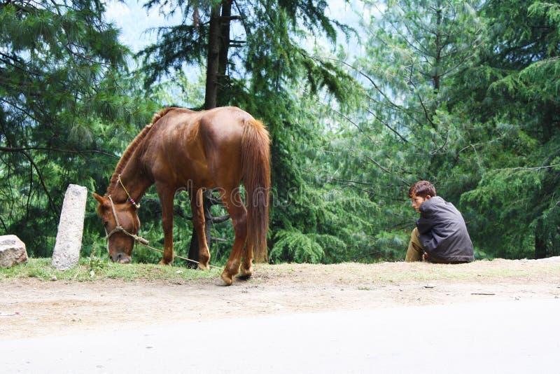 HorseBoyen arkivfoton