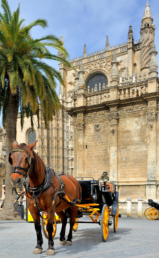 Horsedrawn carriage waiting stock images