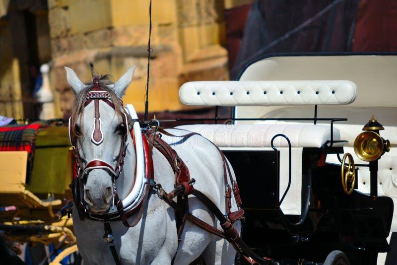 Horsedrawn vagn i Cordoba, Spanien arkivbild