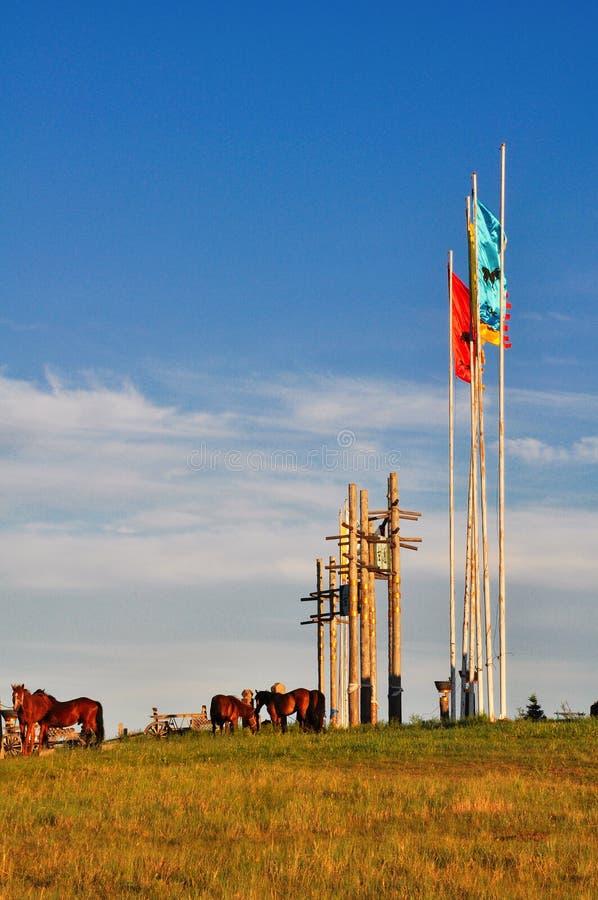 horsees Inner Mongolia royaltyfria foton