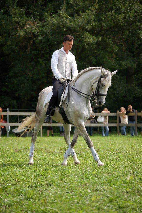 Horsefair 2010 Belgium stock photos