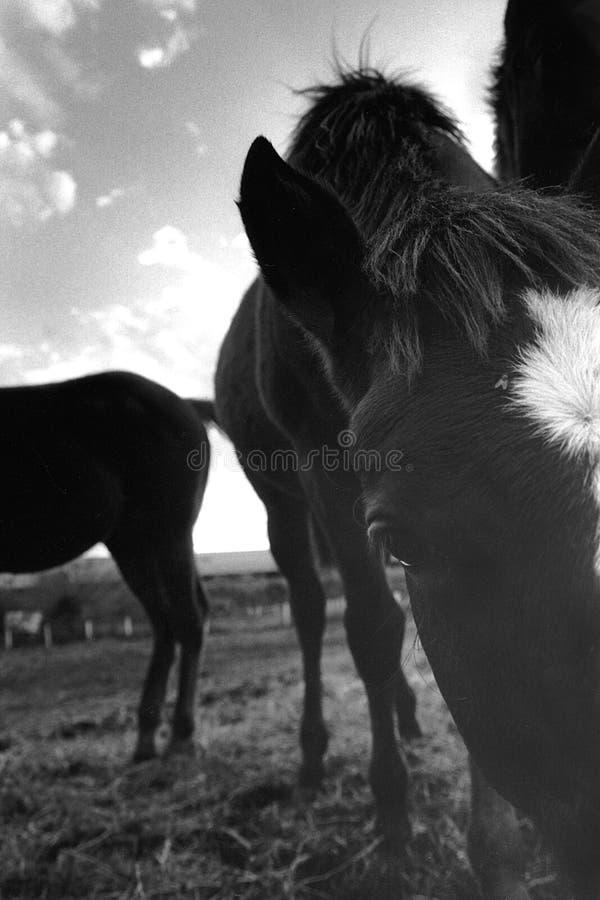 horsefly fotografia stock libera da diritti