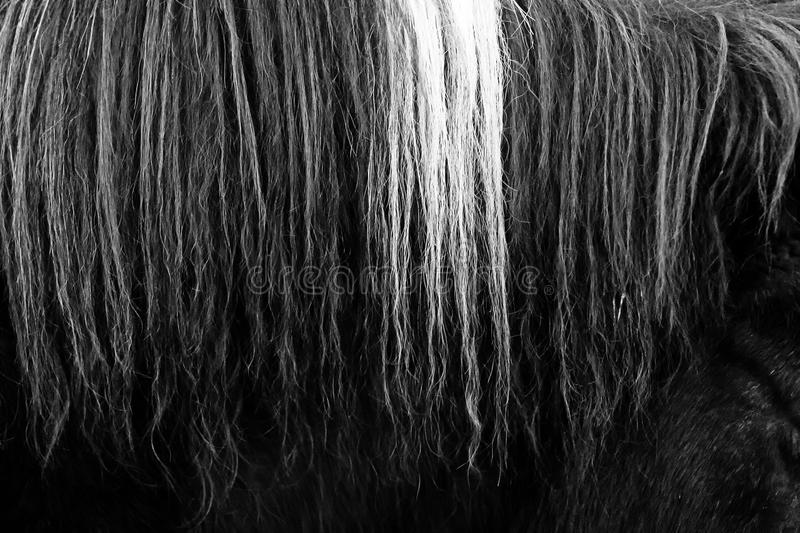 Horsehair b&w close up. Close up of details of horse hair texture in black and white stock photo