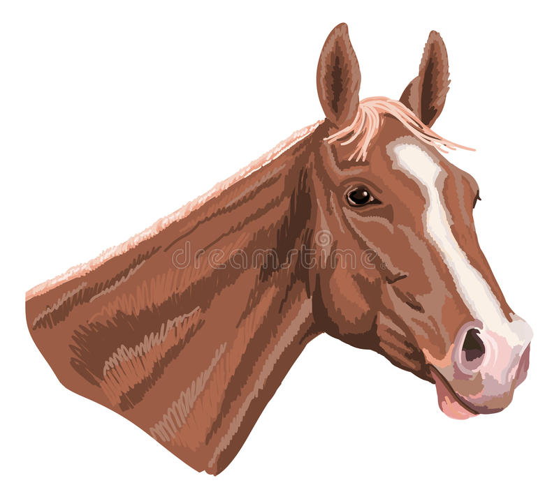 Download Horsehead ilustración del vector. Ilustración de verano - 44854100
