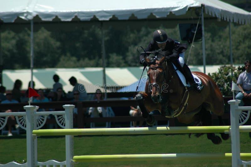 Download Horsejumping fotografering för bildbyråer. Bild av show - 987061