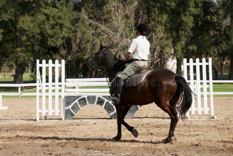 The horseman on a bay horse. royalty free stock photos