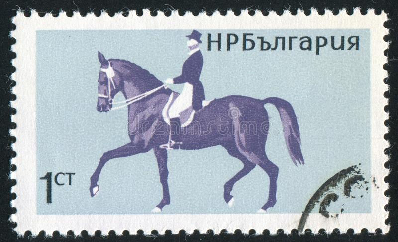 horsemanship royaltyfri bild