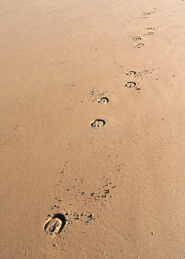 Horseprints photographie stock libre de droits