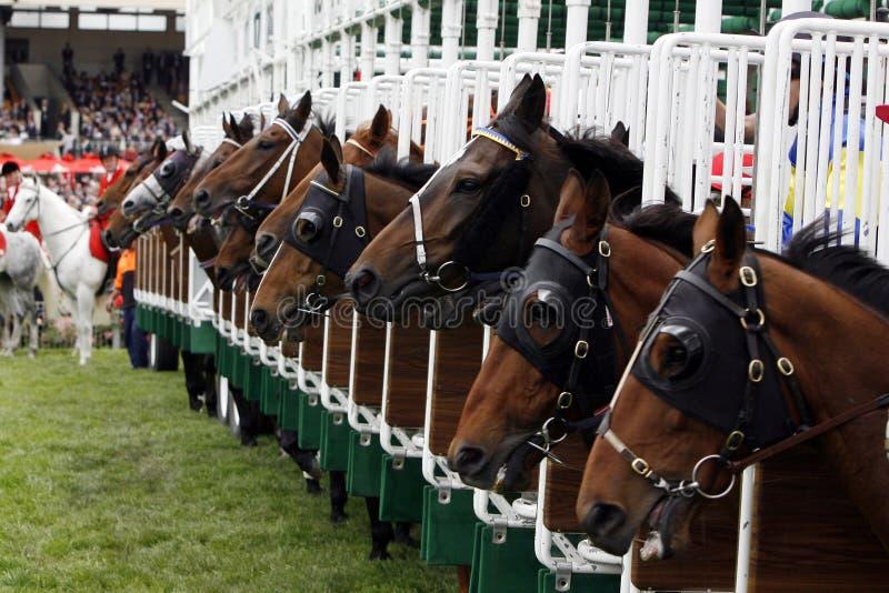 Horserace Anfangsgatter lizenzfreie stockbilder