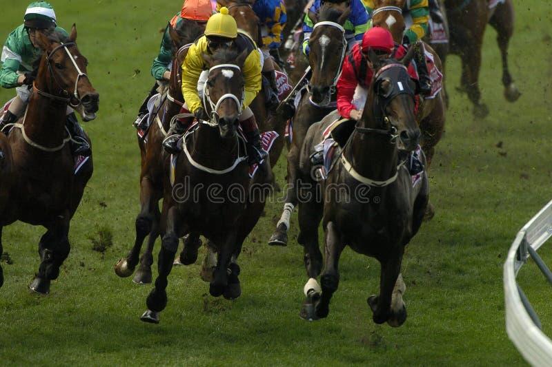 Horseracing 024 foto de stock royalty free