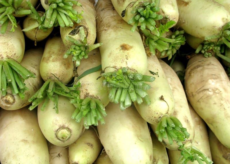 Download Horseradish stock photo. Image of freshly, harvest, delicious - 16469002