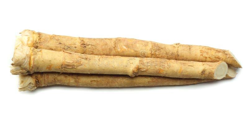 horseradish korzeń z pietruszką odizolowywającą na białym tle fotografia royalty free