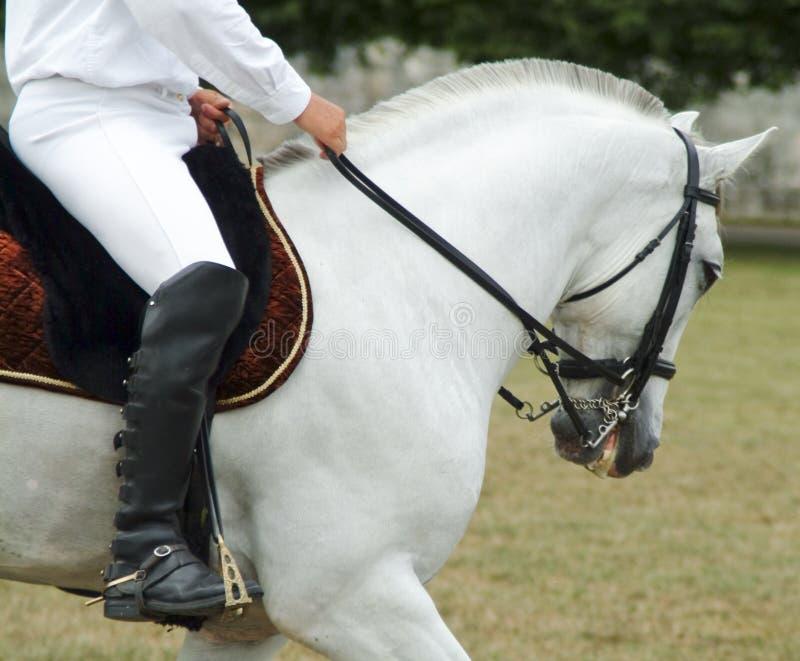 horserider 库存图片