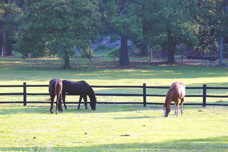 Horses # 1 stock images