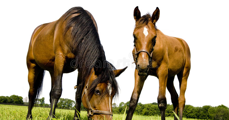 Download Horses stock image. Image of horse, head, trees, grass - 10816665