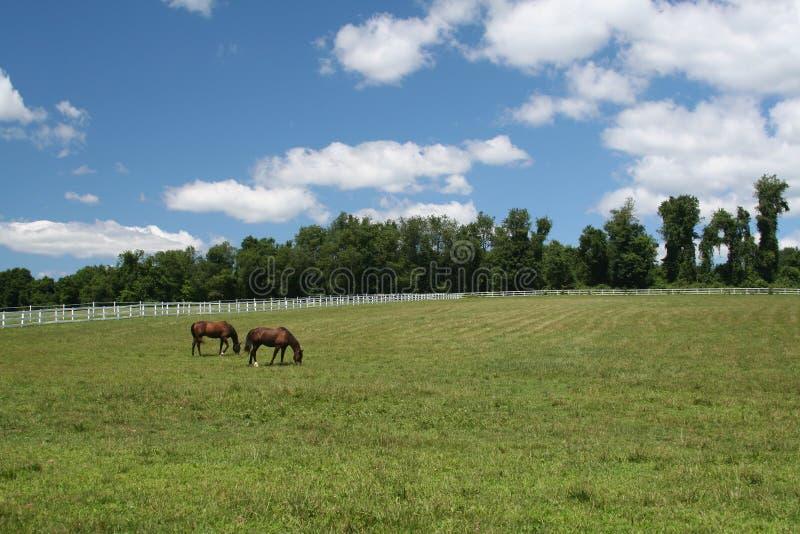 Horses royalty free stock photography