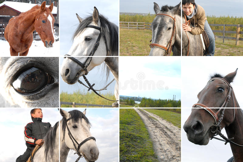 Download Horses stock photo. Image of healthy, diognal, girl, pony - 11418832